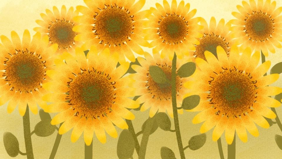 Background cây hoa hướng dương