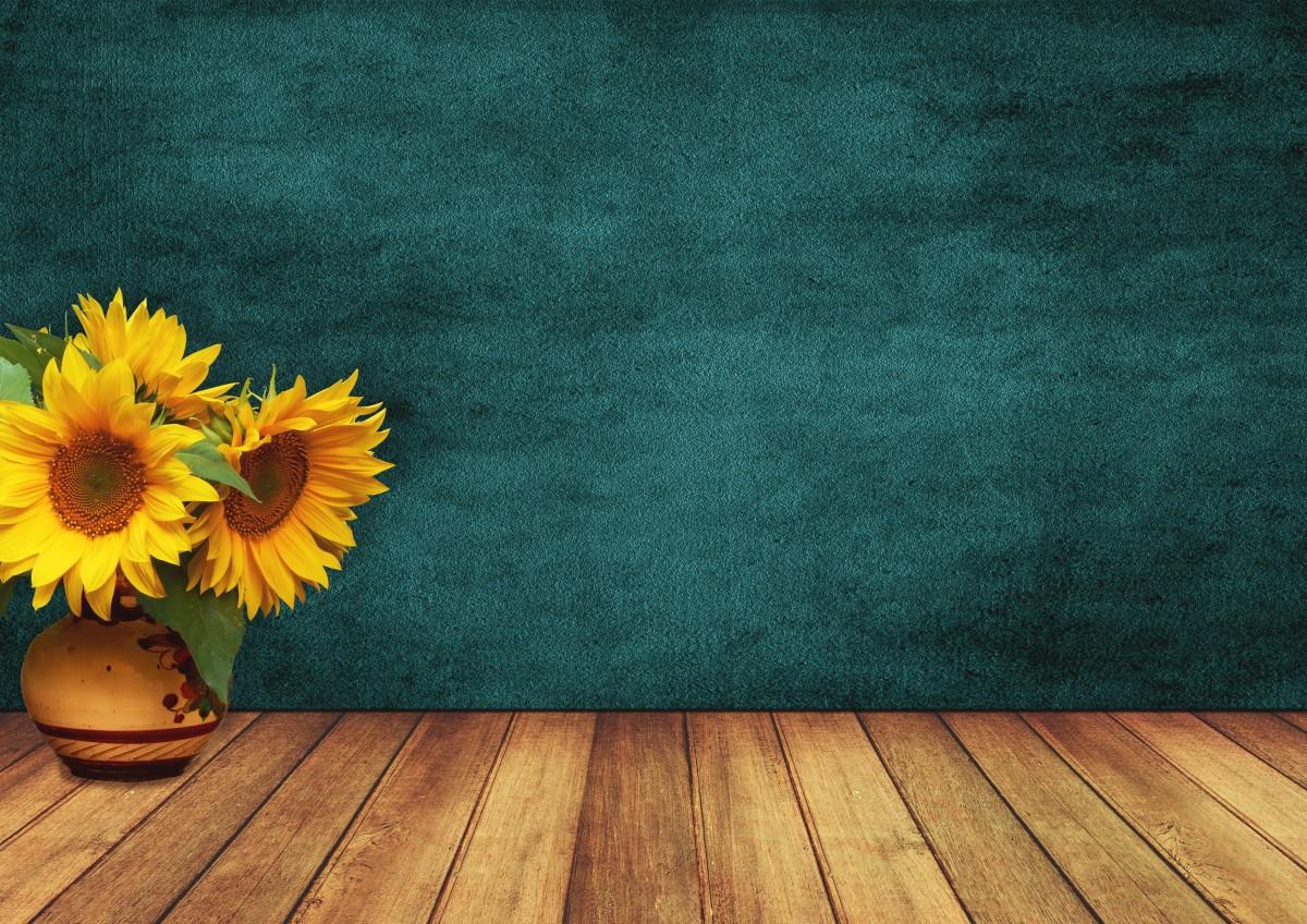 Background hoa hướng dương đẹp
