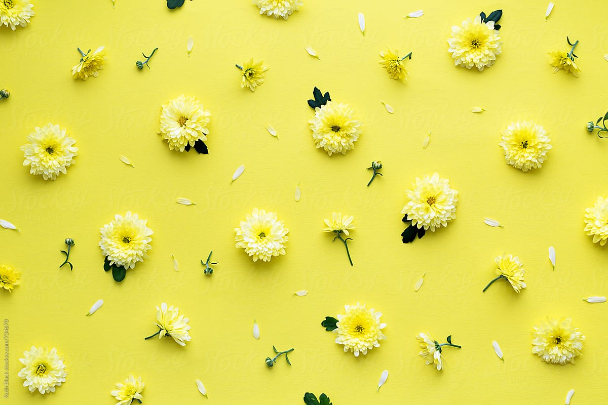 Background hoa tươi đẹp