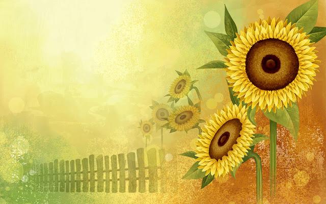 Nền background hoa hướng dương