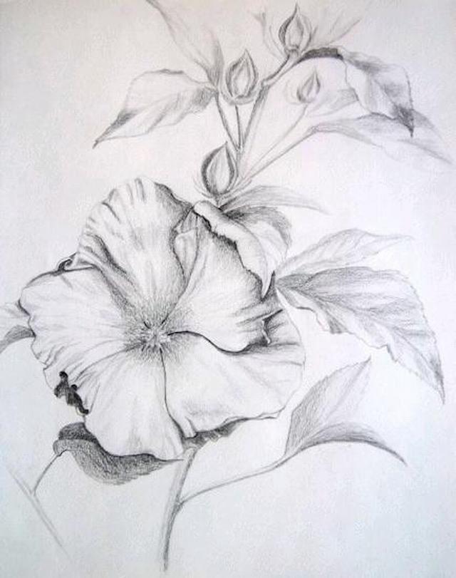 Tranh vẽ chì bông hoa