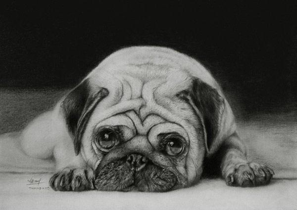 Tranh vẽ chì động vật