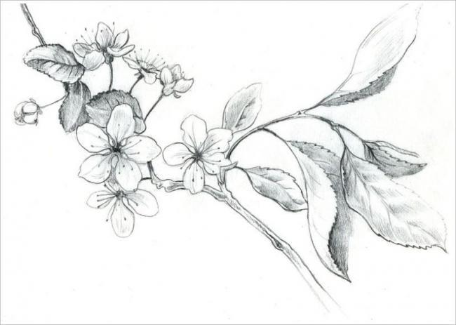 Tranh vẽ chì thực vật