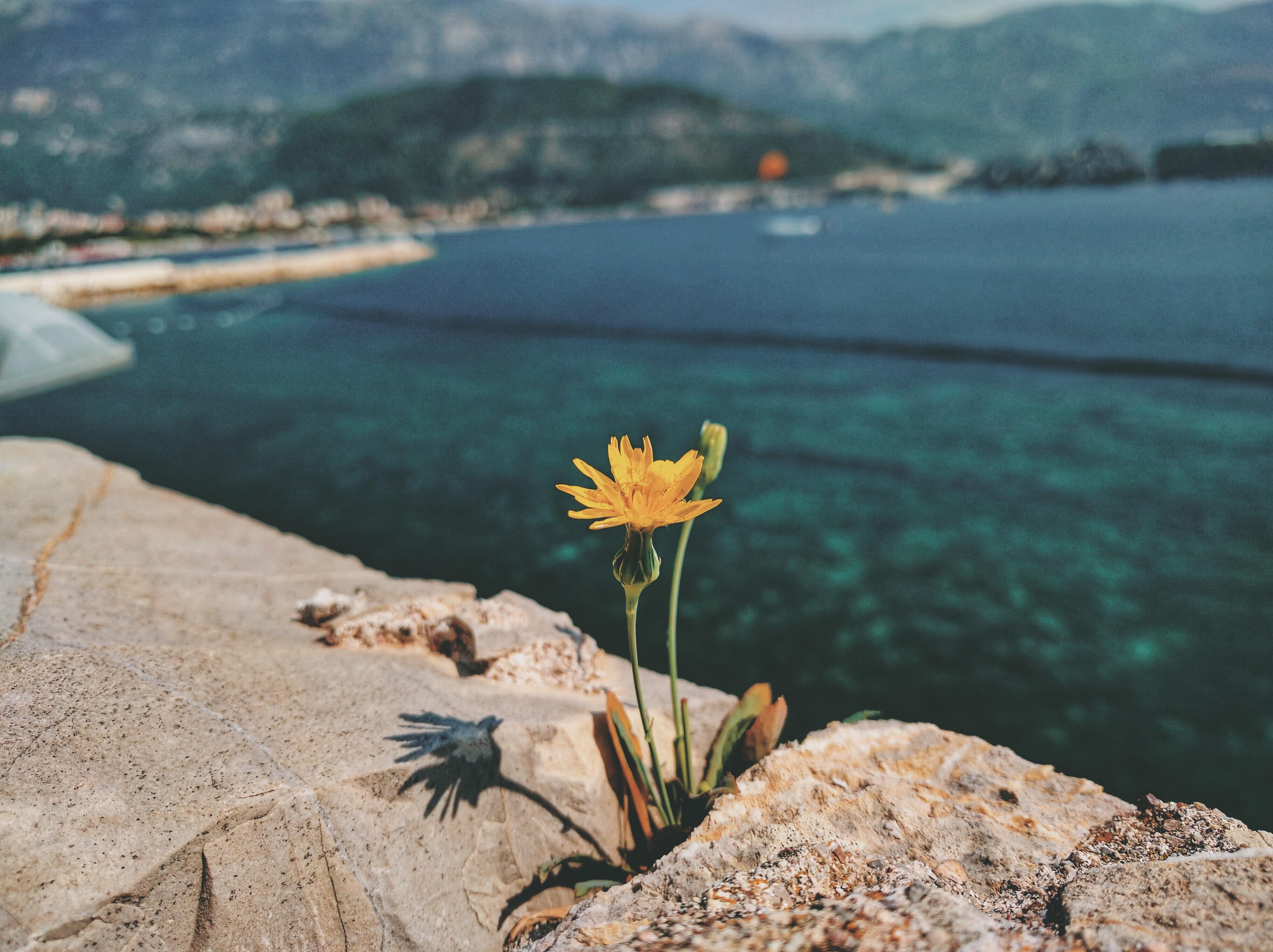 Ảnh Background phong cảnh đơn giản mà đẹp