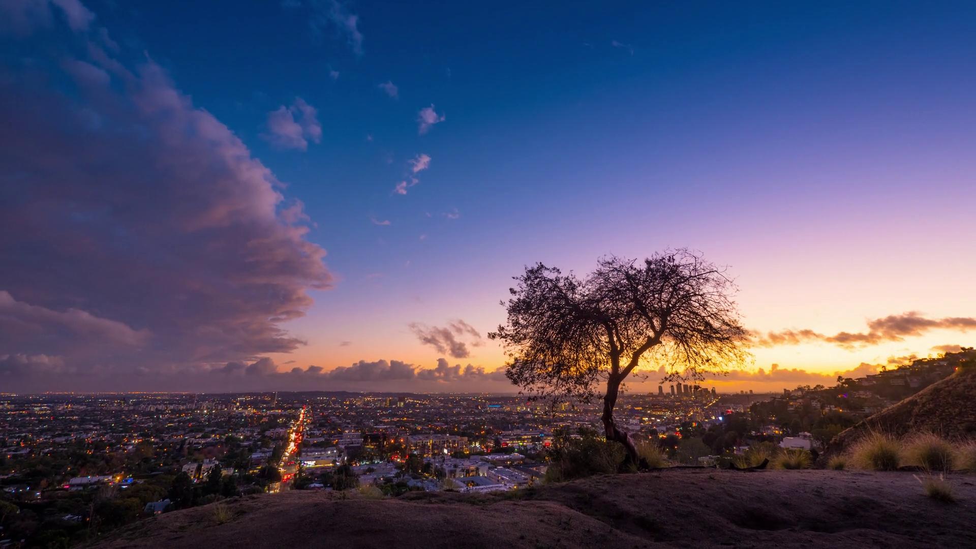 Background phong cảnh cây cối