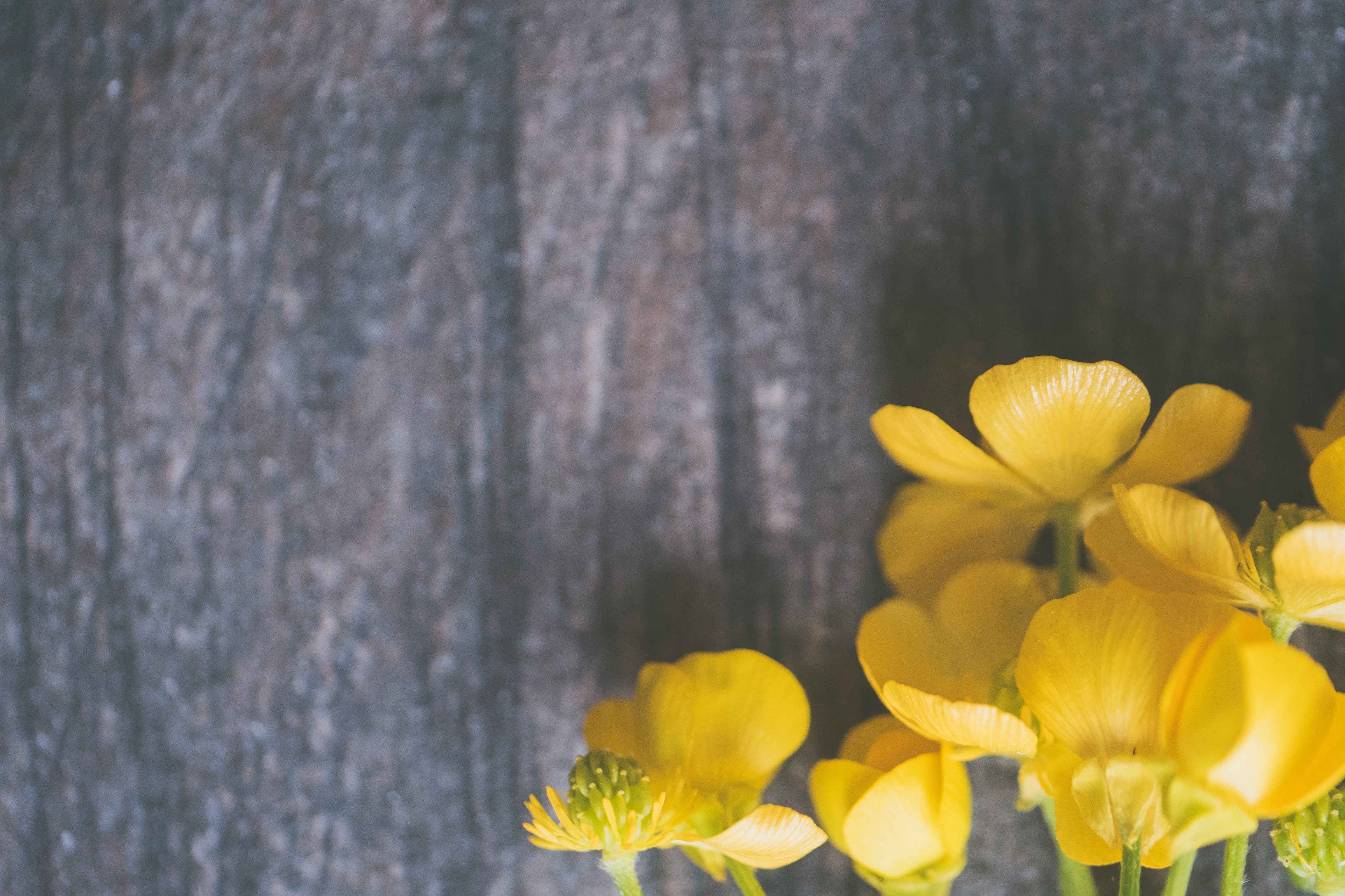 Background quảng cáo hoa cực đẹp