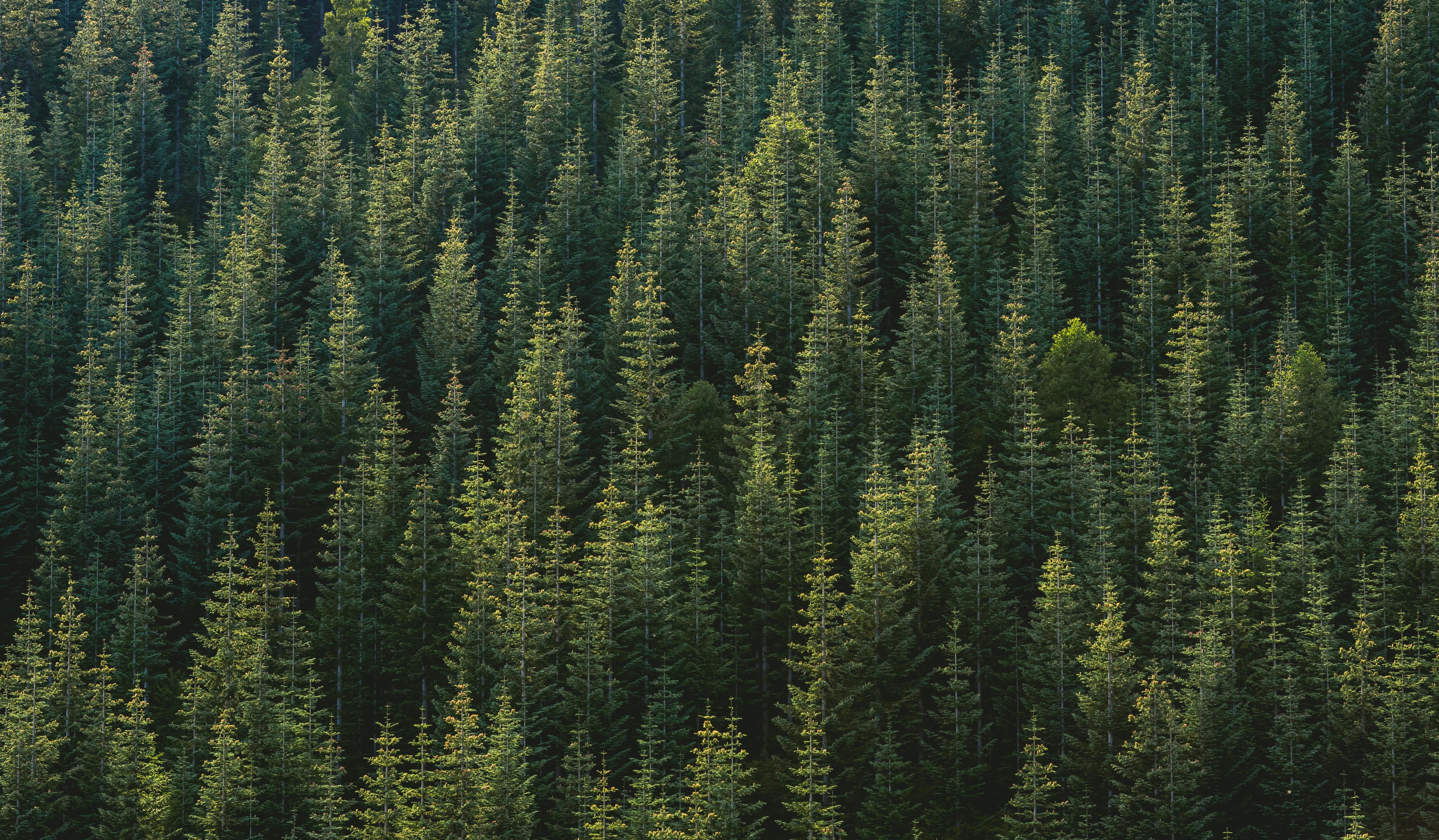 Background rừng đẹp