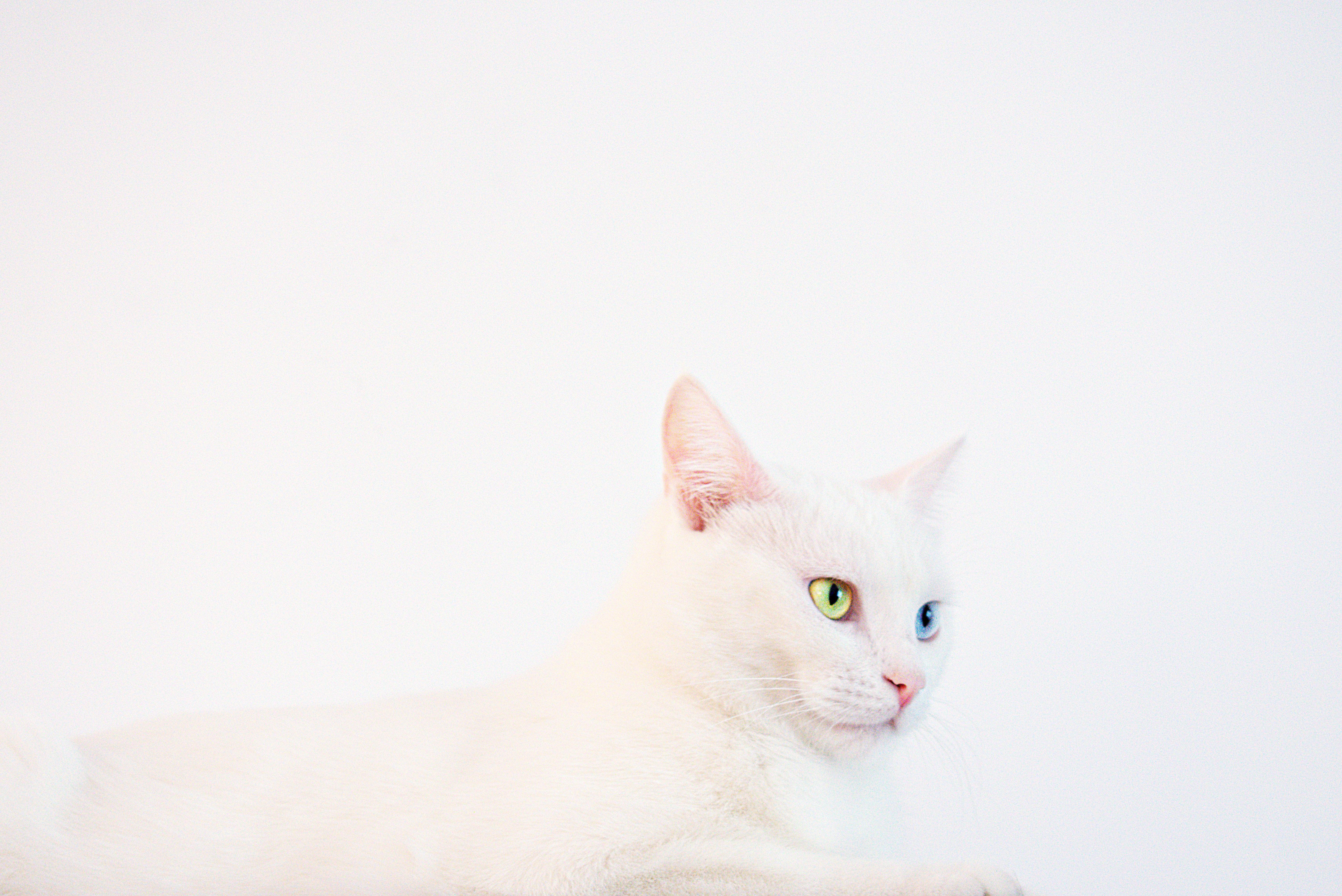 Ảnh Background màu trắng