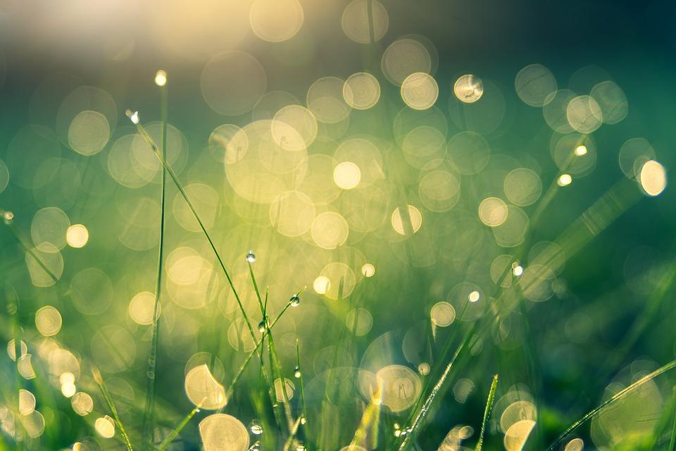 Background đồng cỏ thiên nhiên