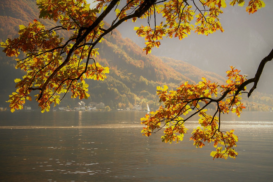 Background phong cảnh thiên nhiên