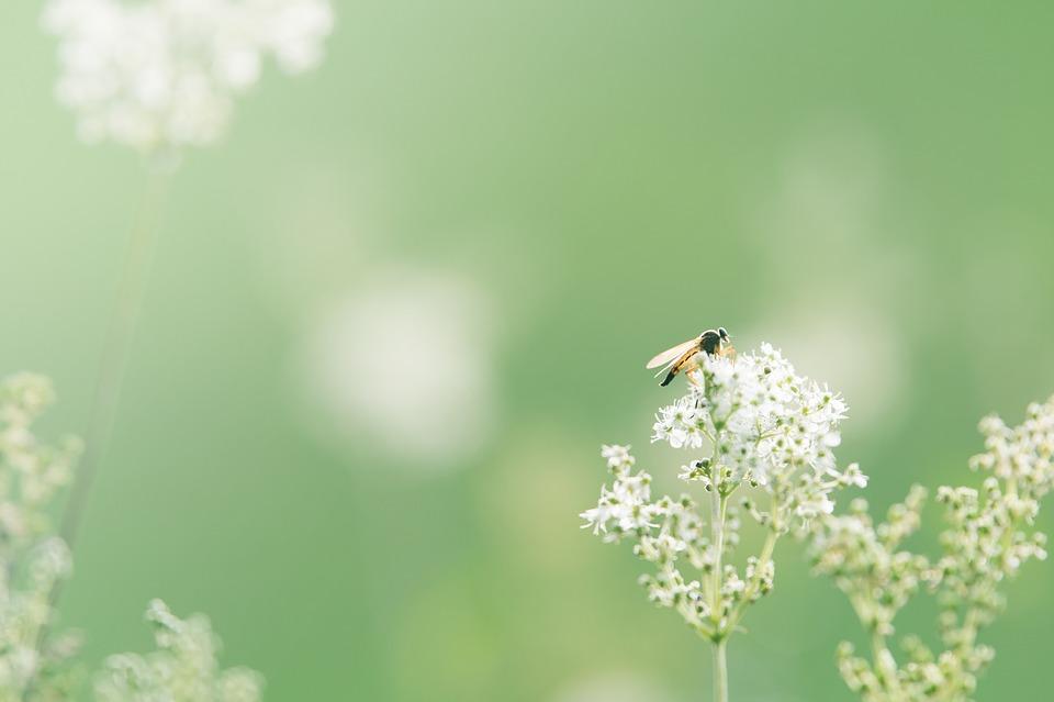 Background thiên nhiên cỏ cây đẹp
