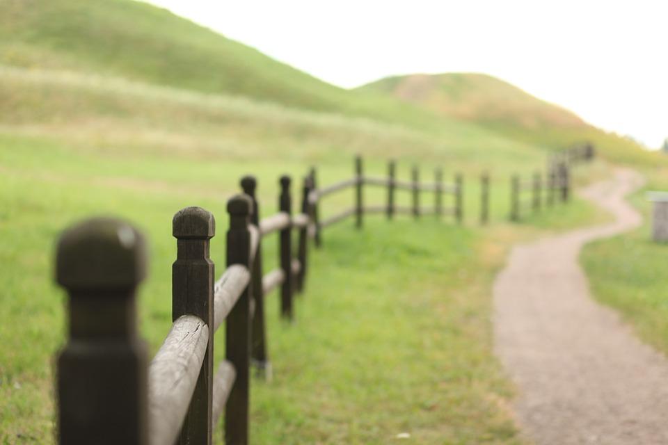 Background thiên nhiên cuộc sống
