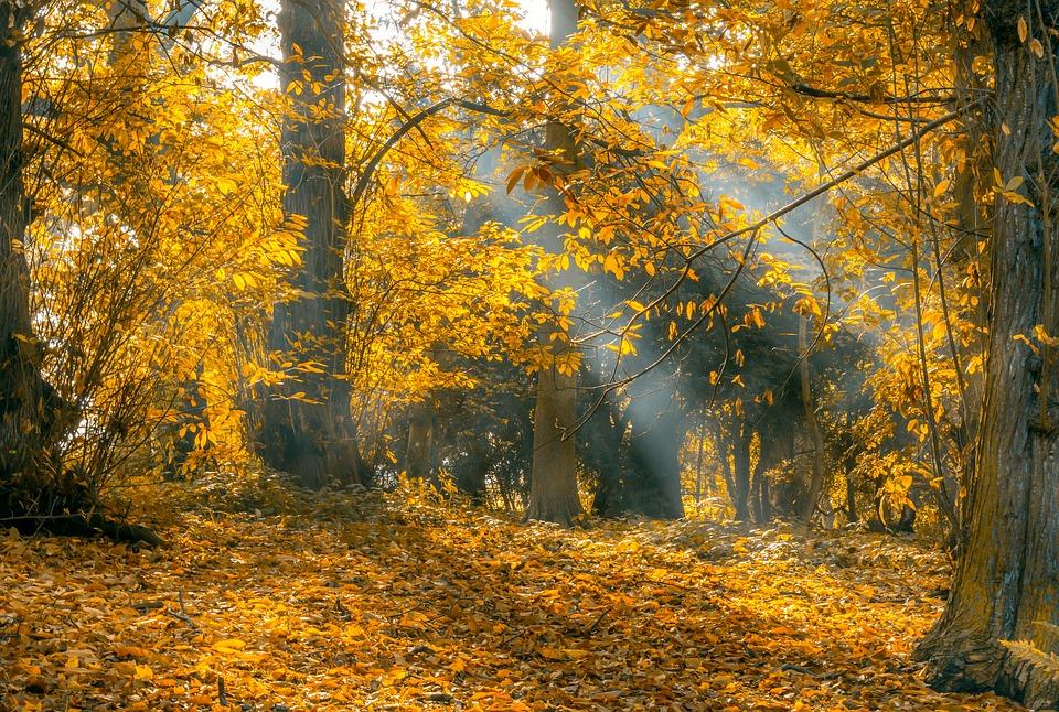 Background thiên nhiên đẹp và hoang dã