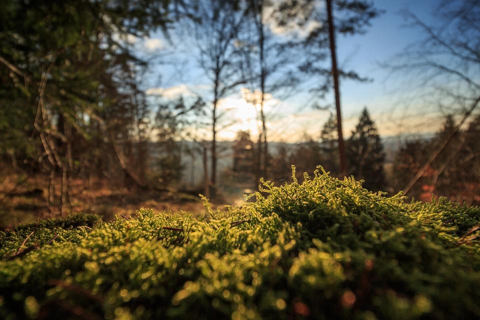 Background thiên nhiên trong rừng