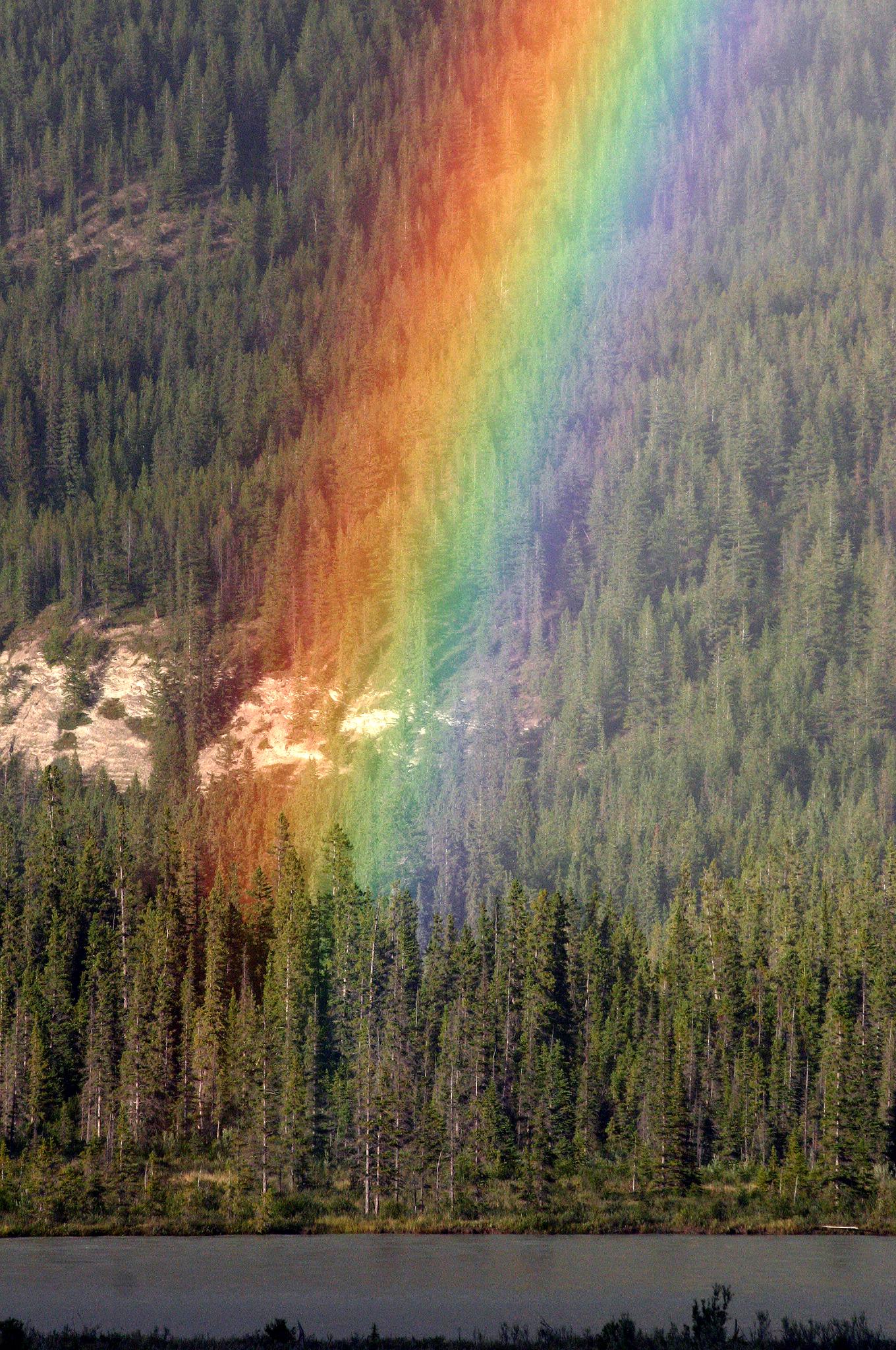 Cầu vồng nhiều màu trên rừng lá kim