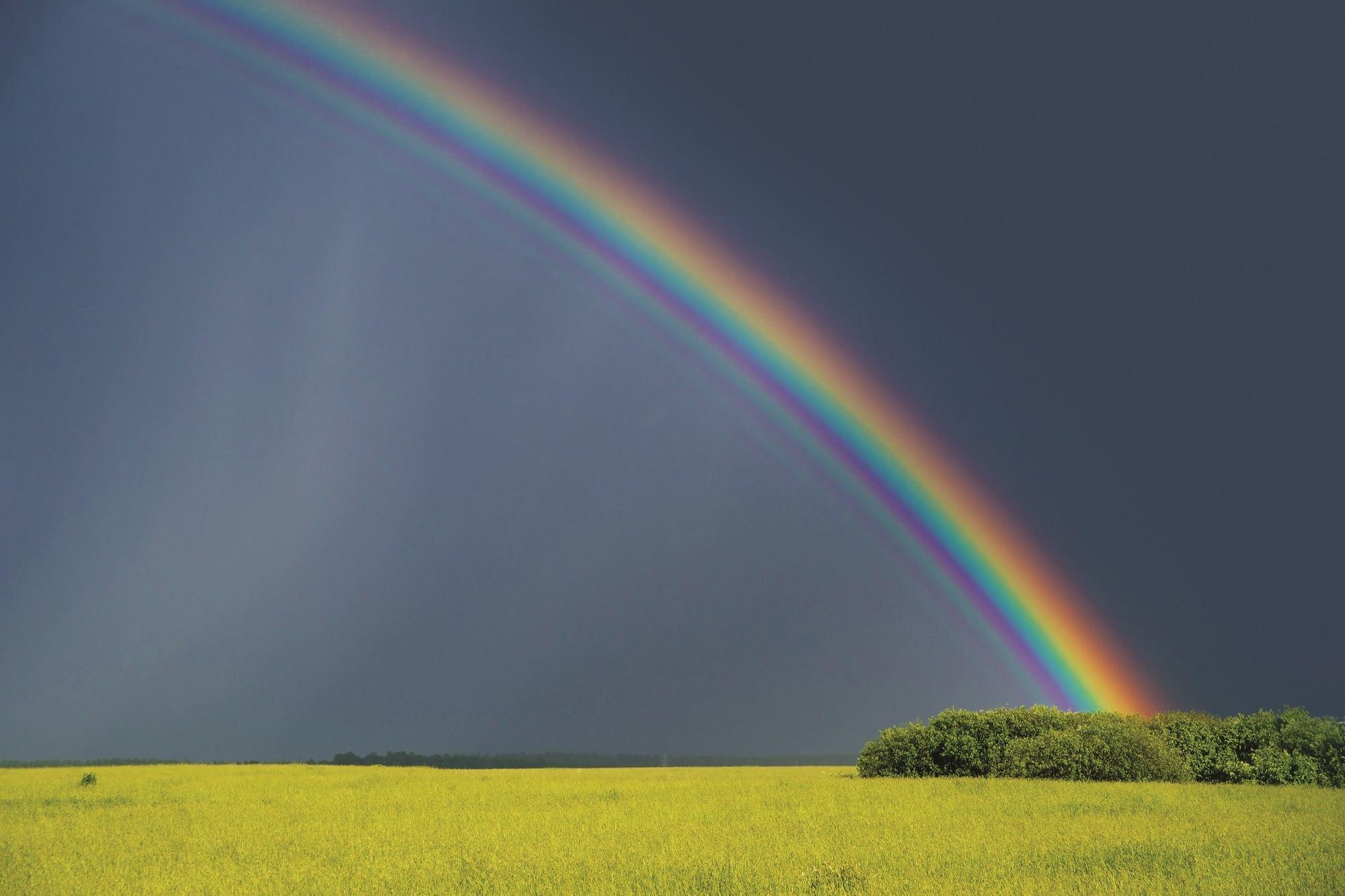 Hình ảnh cầu vồng đẹp trên cánh đồng