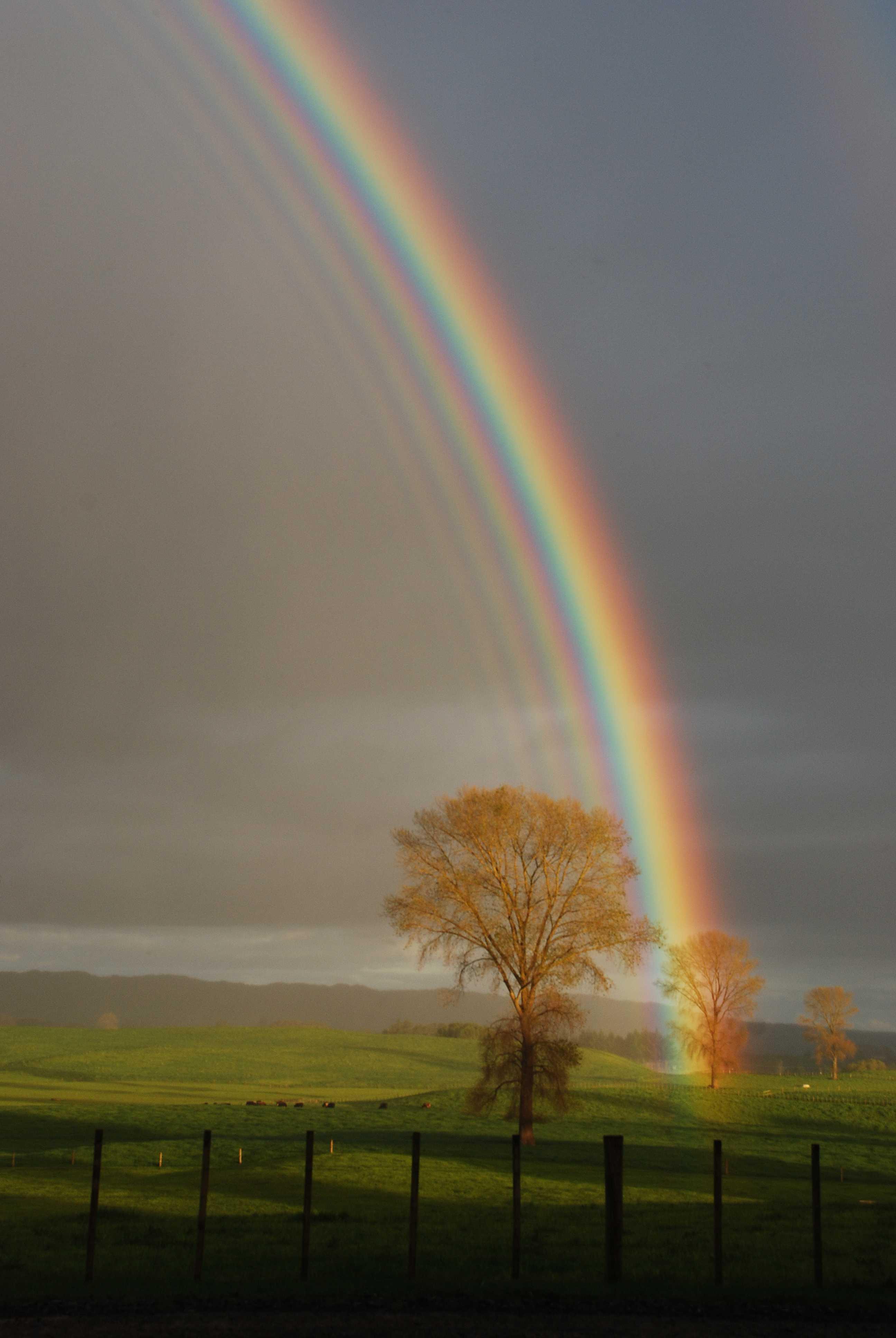 Hình ảnh cầu vồng rất đẹp trên đồng cỏ