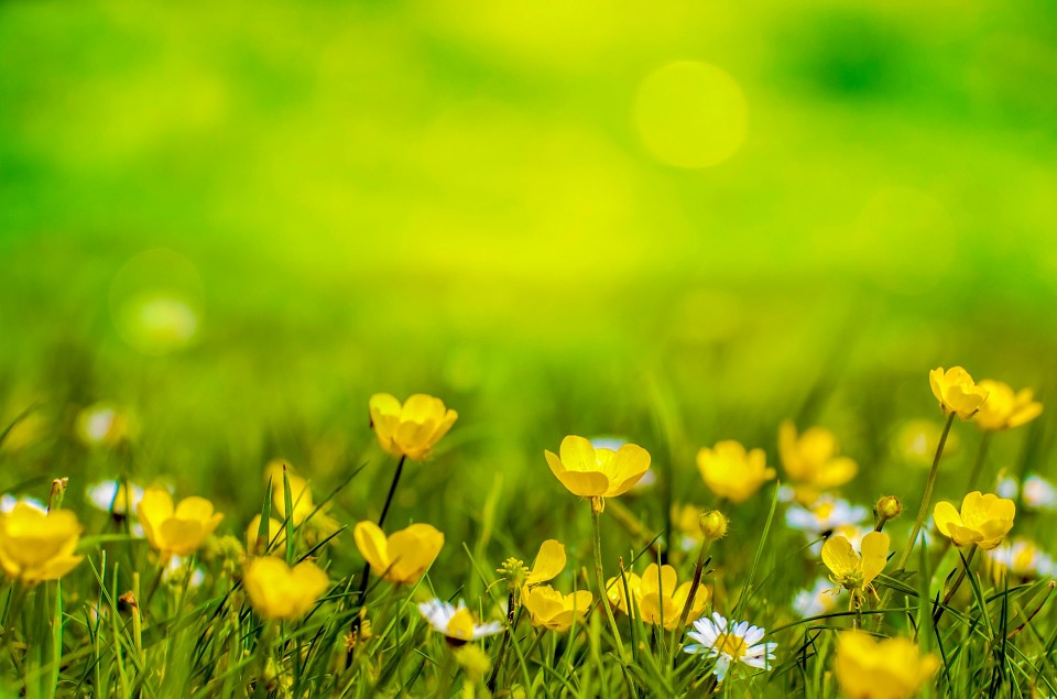 Hình background thiên nhiên cỏ cây