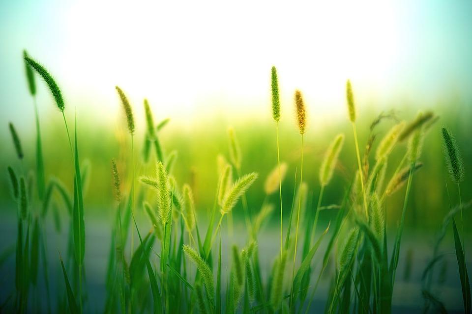 Nền background thiên nhiên cây cỏ
