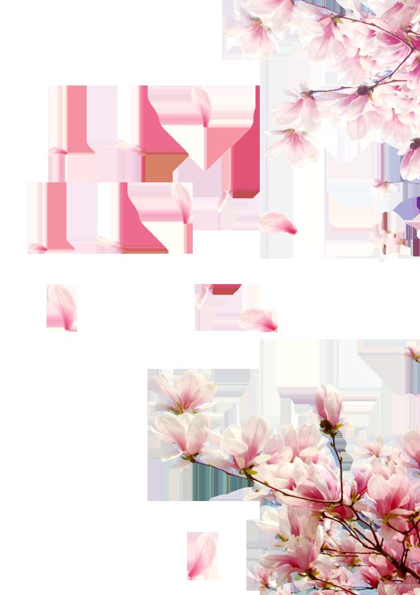 Ảnh cánh hoa đào rơi