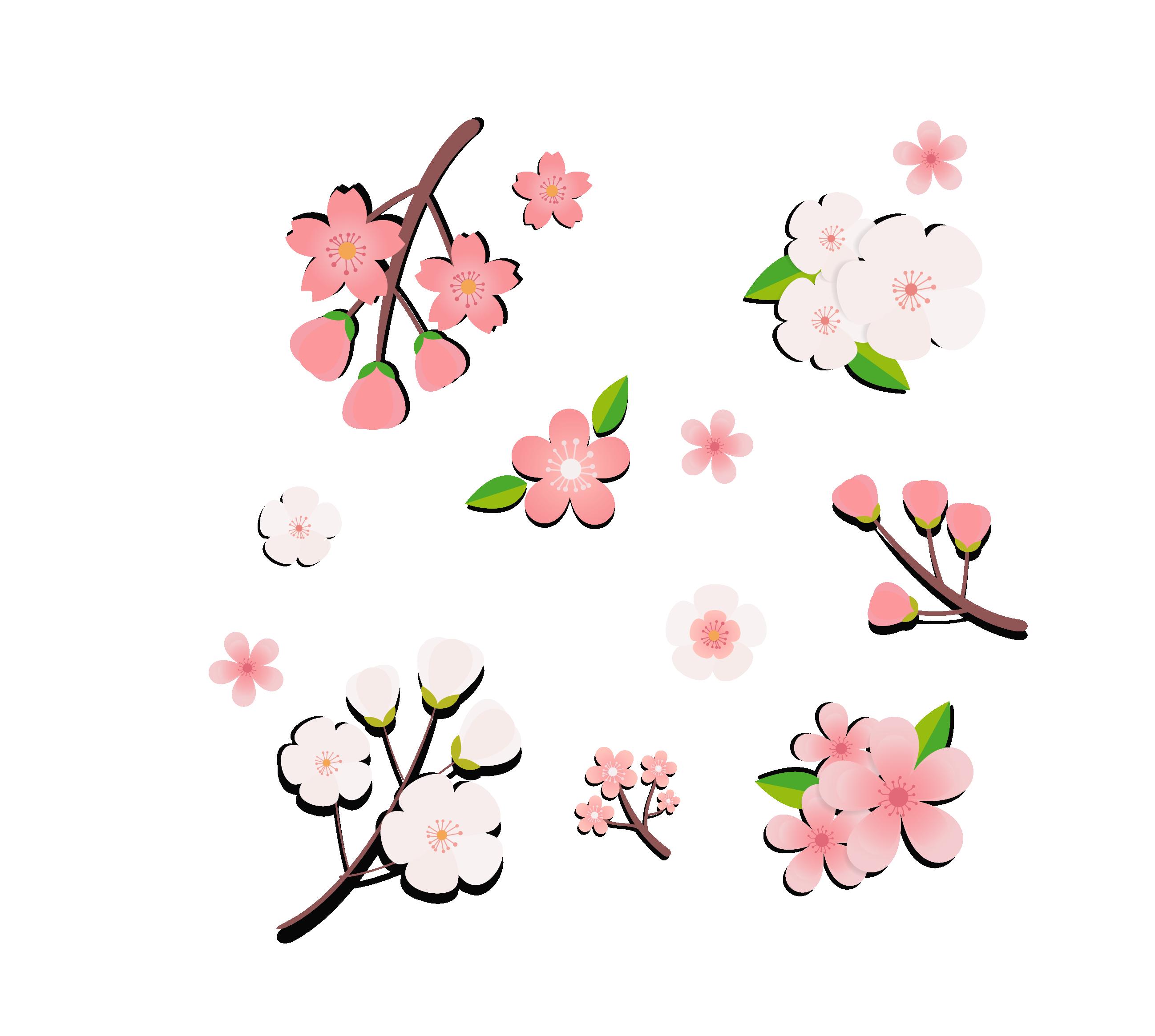 Ảnh hoa đào anime