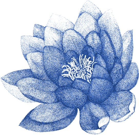 Ảnh hoa sen màu xanh đẹp