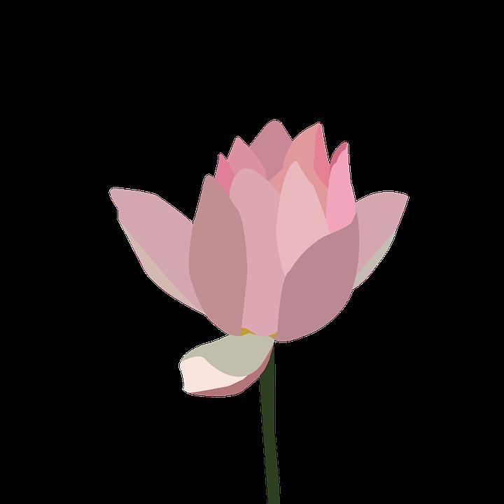 Ảnh hoa sen vẽ