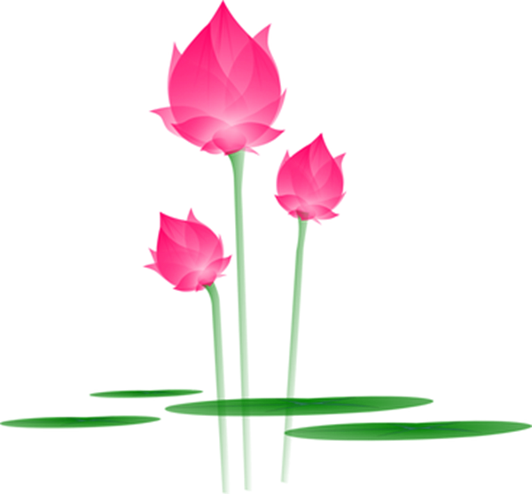 Ảnh mẫu cây hoa sen PNG