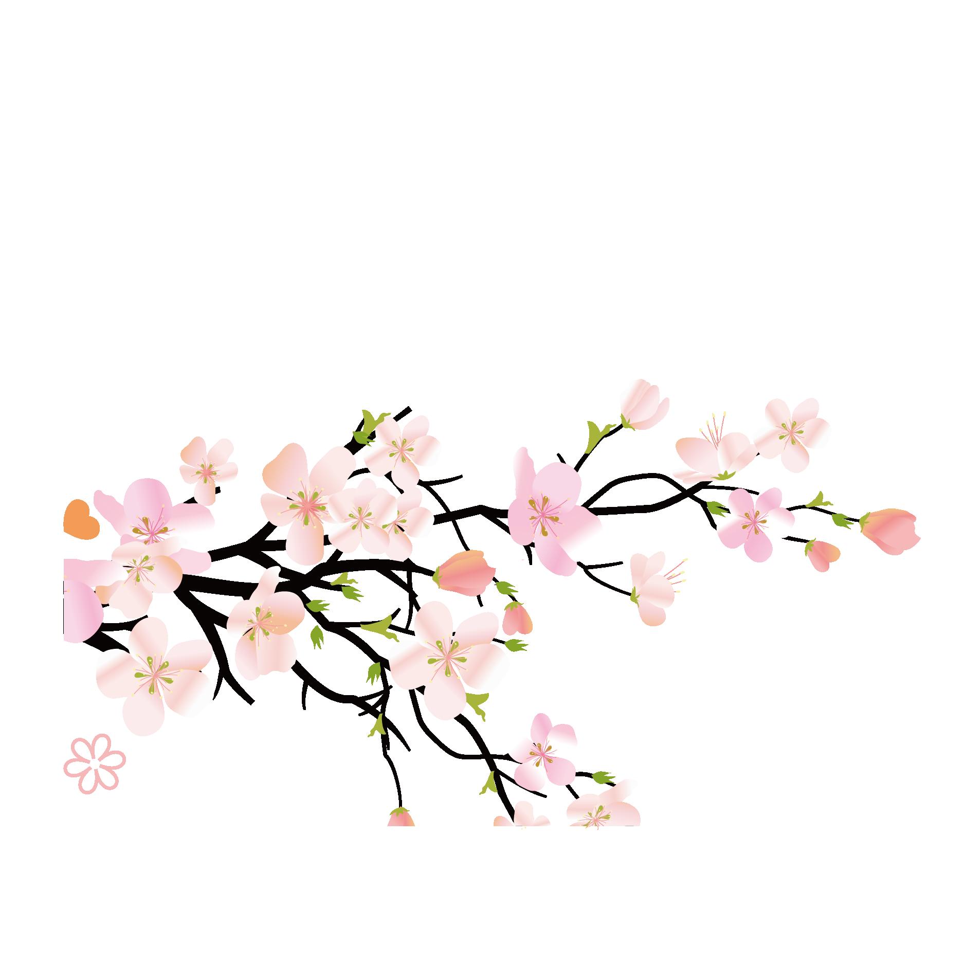 Ảnh nhánh hoa đào PNG đẹp