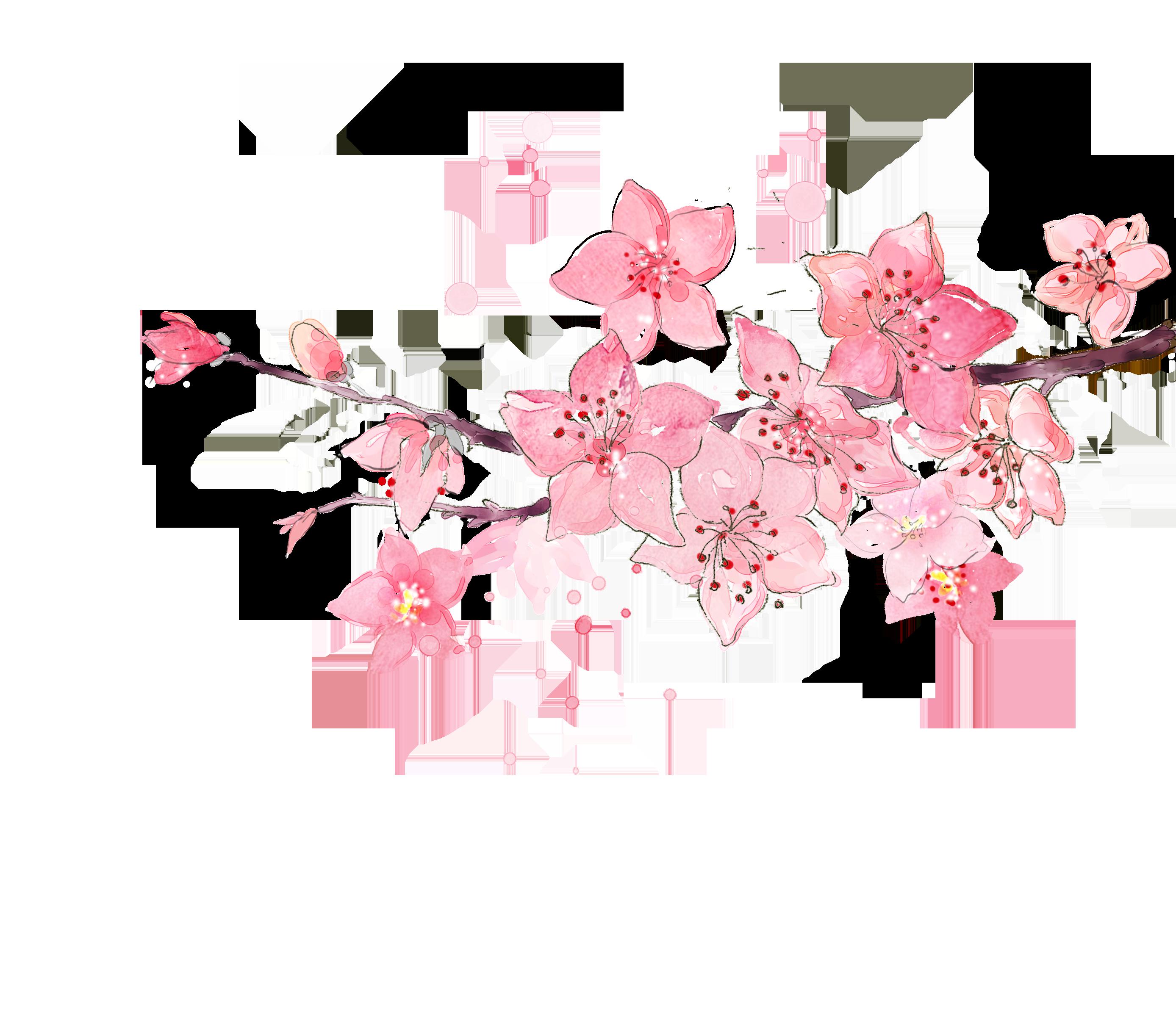 Ảnh vẽ cành hoa anh đào