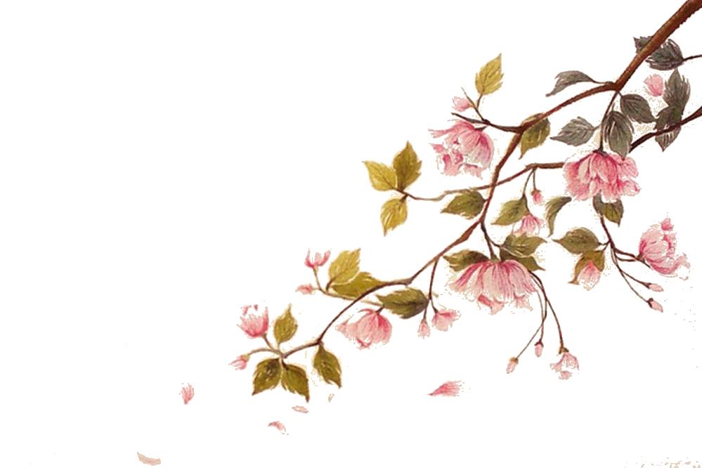 Hình ảnh cành hoa đào đẹp