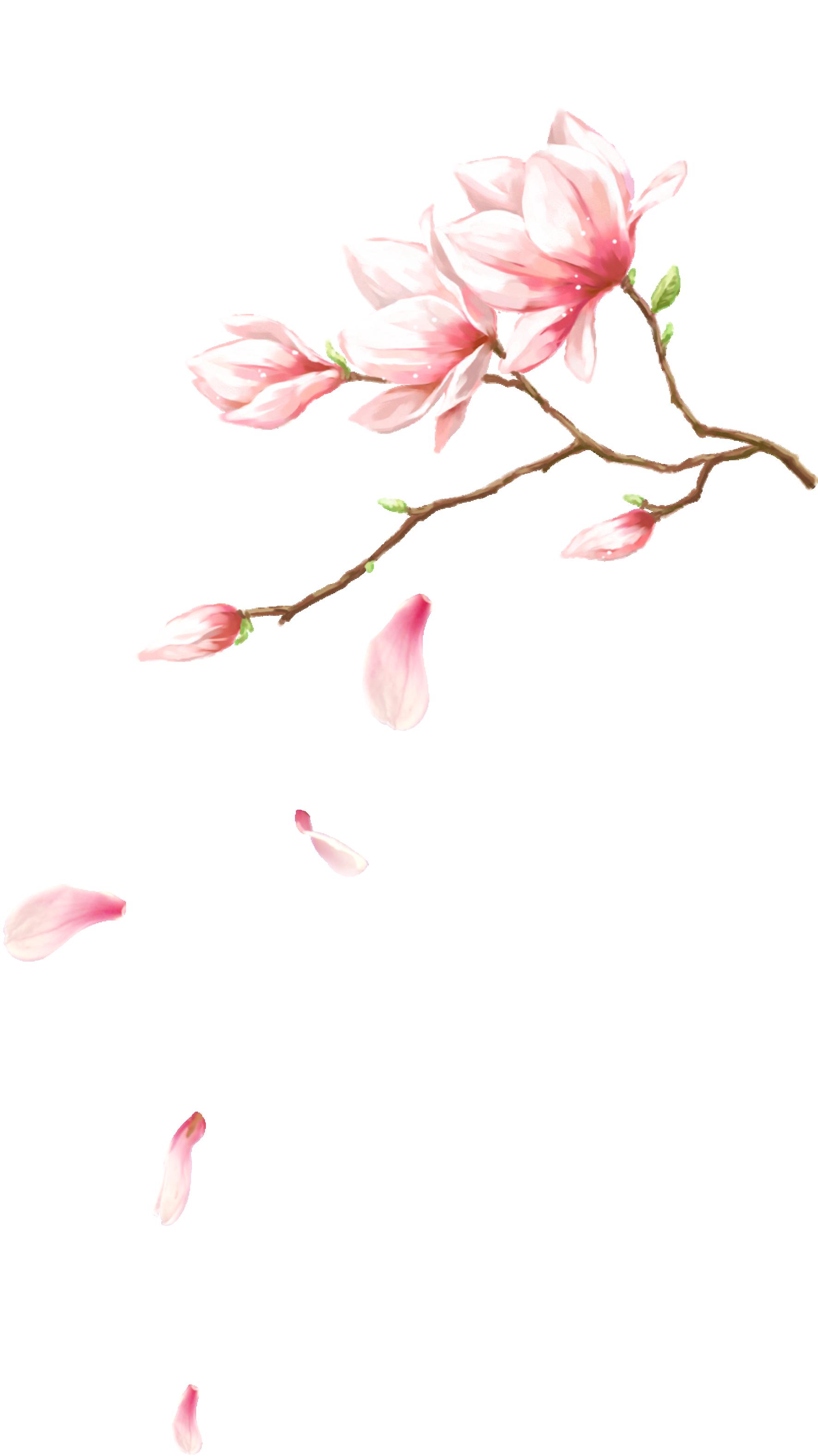 Hình ảnh cánh hoa đào nở