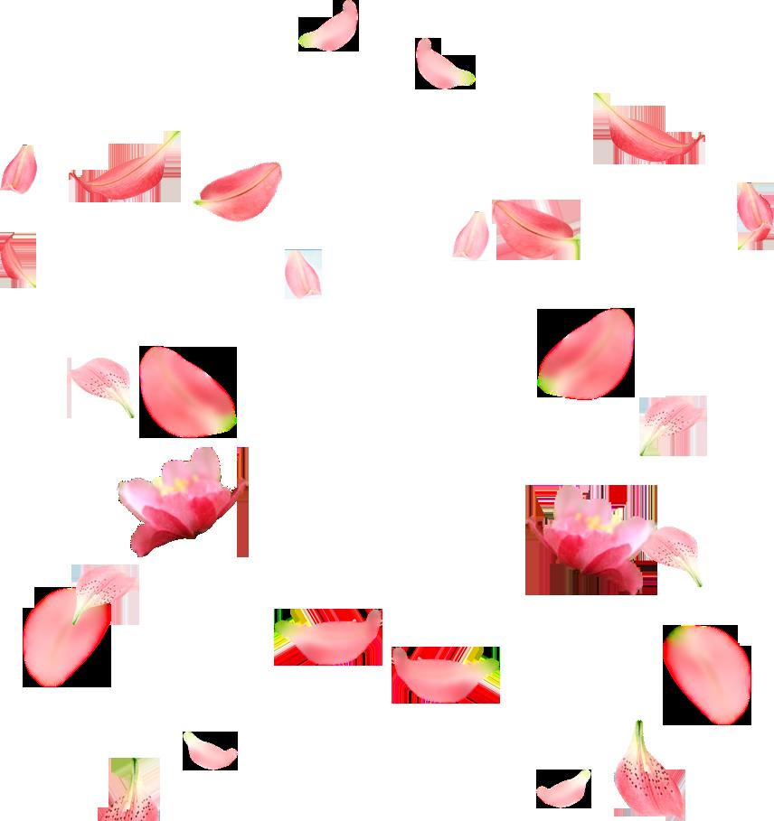 Hình ảnh cánh hoa đào