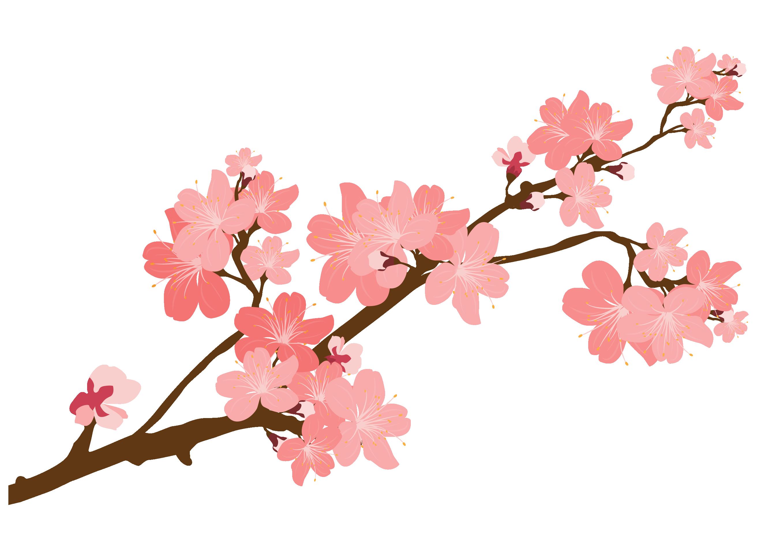 Hình ảnh cành hoa đào