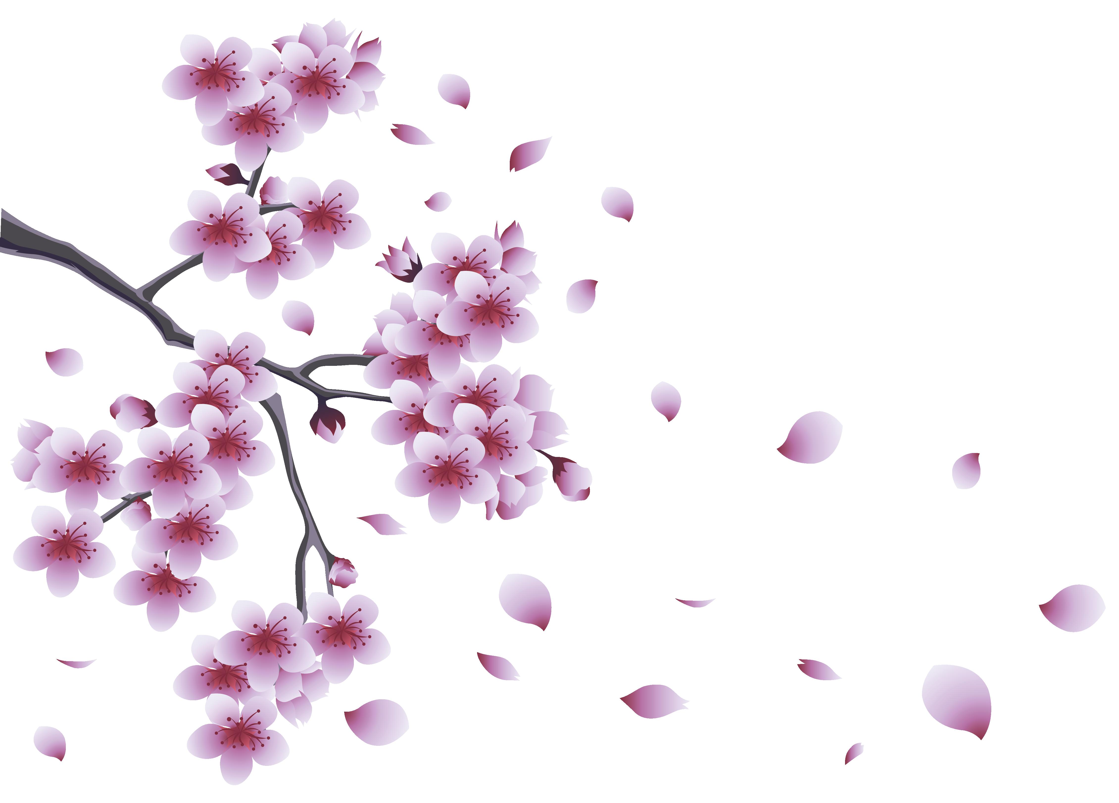 Hình ảnh hoa đào bay