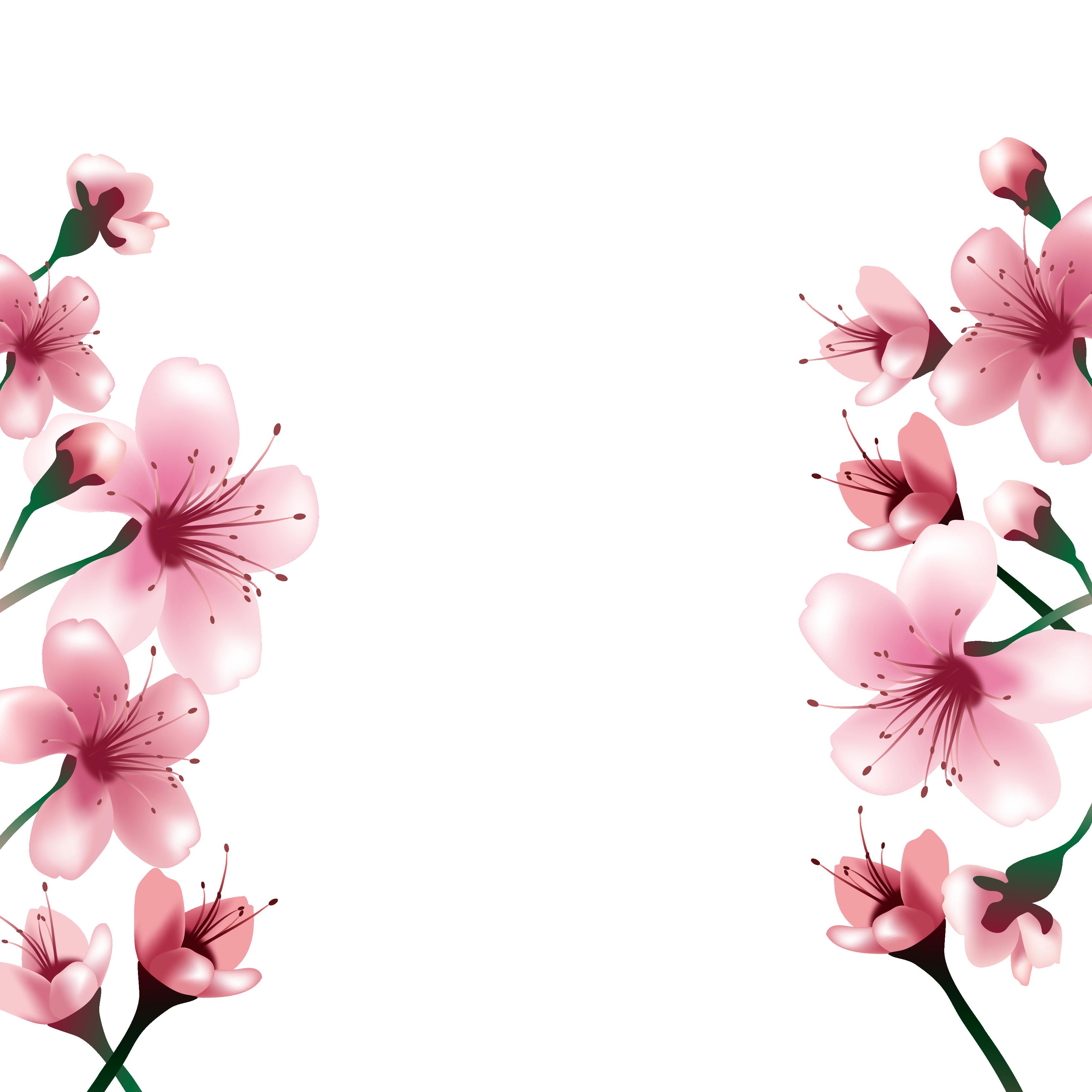 Hình ảnh hoa đào vector đẹp