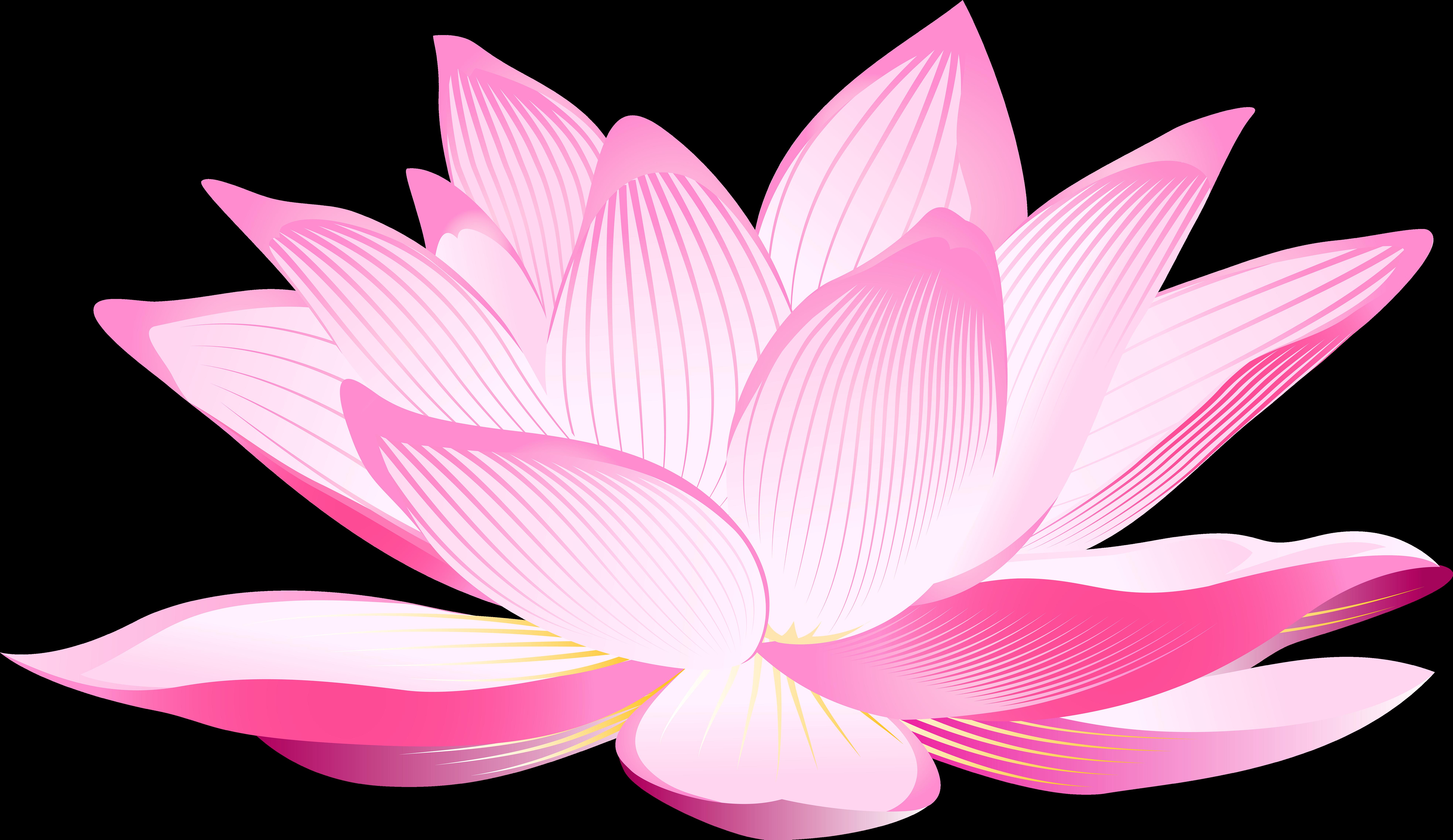 Hình ảnh hoa sen hồng