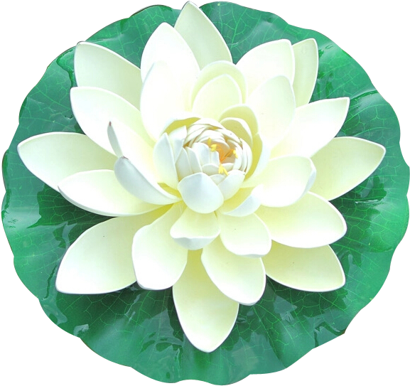 Hình ảnh hoa sen màu trắng PNG