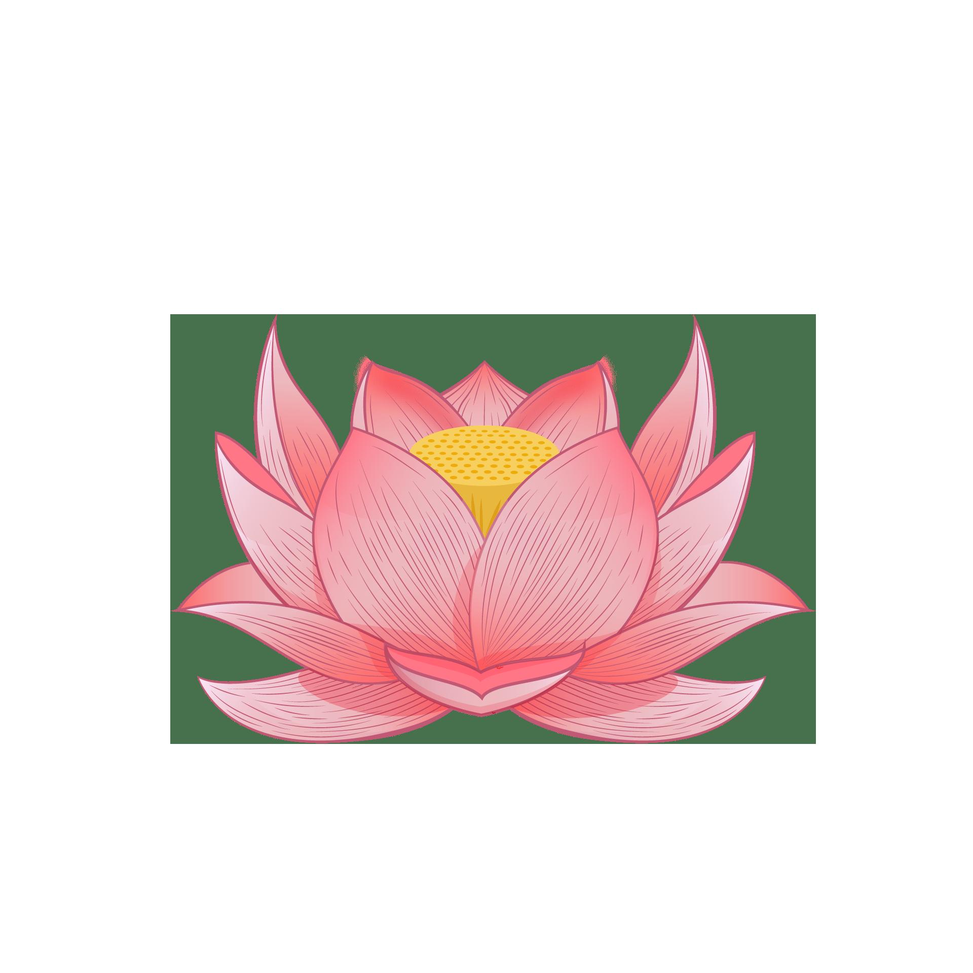 Hình ảnh hoa sen PNG đẹp