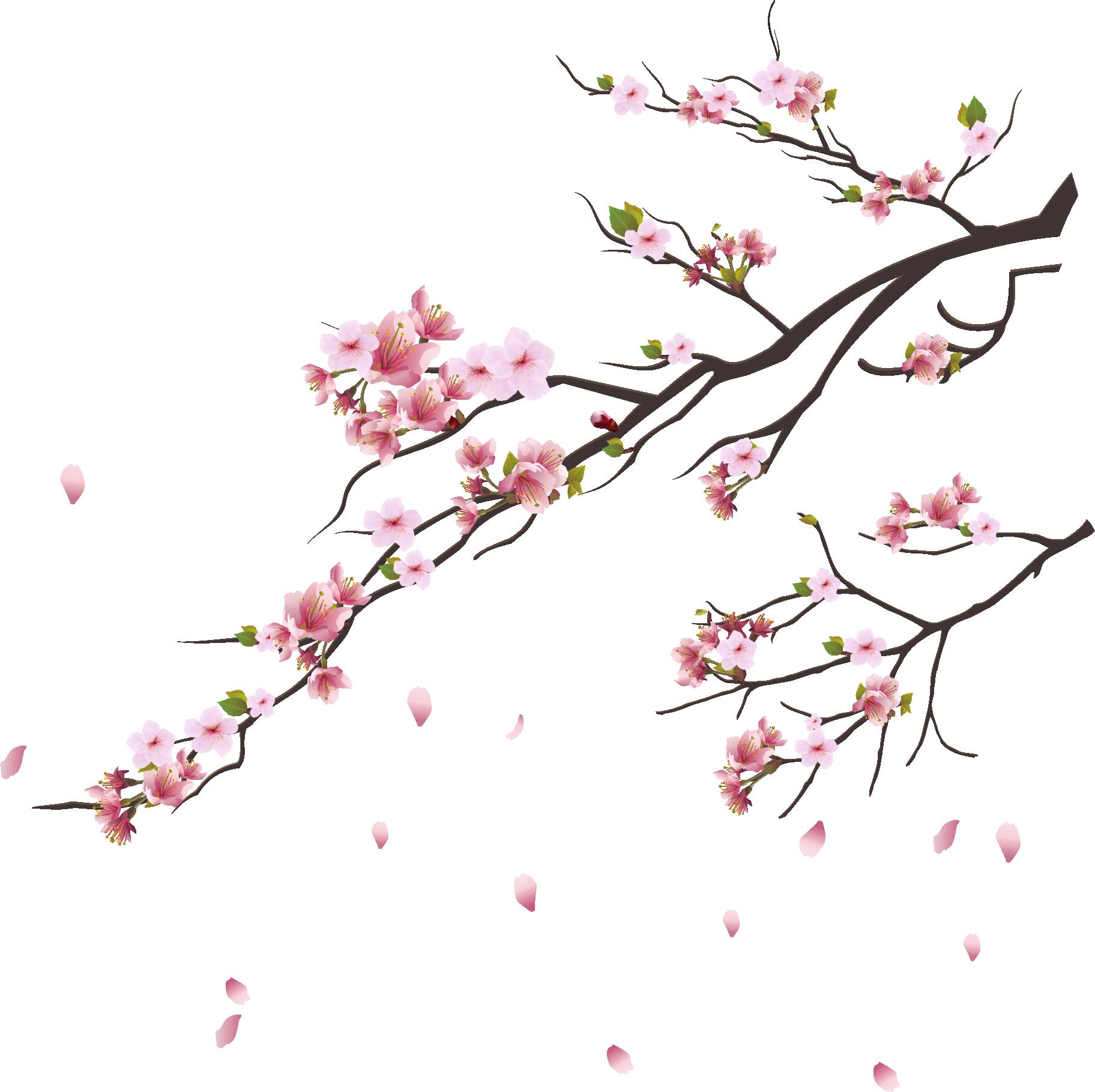 Hình ảnh nhành hoa đào