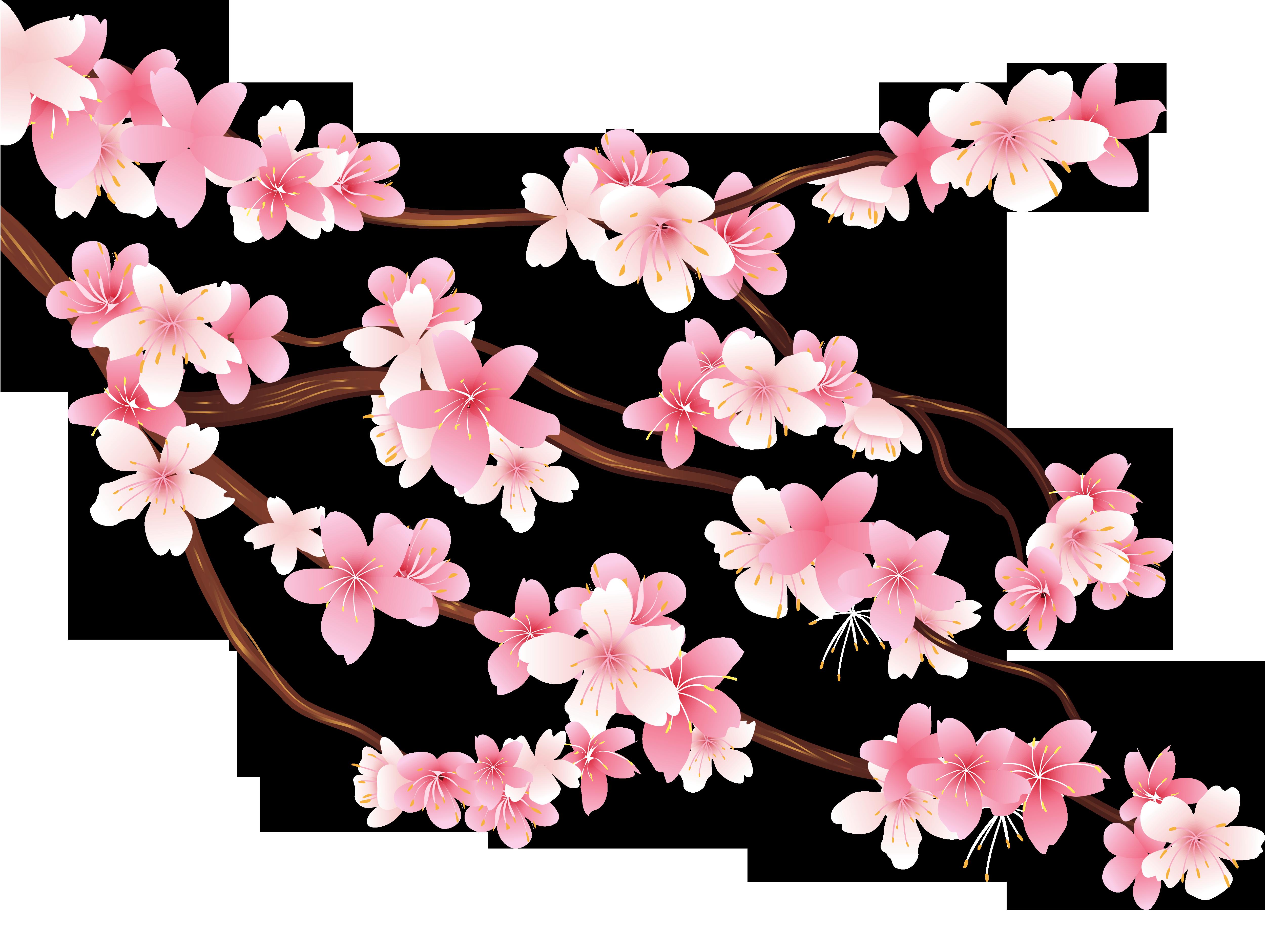 Hoa anh đào PNG