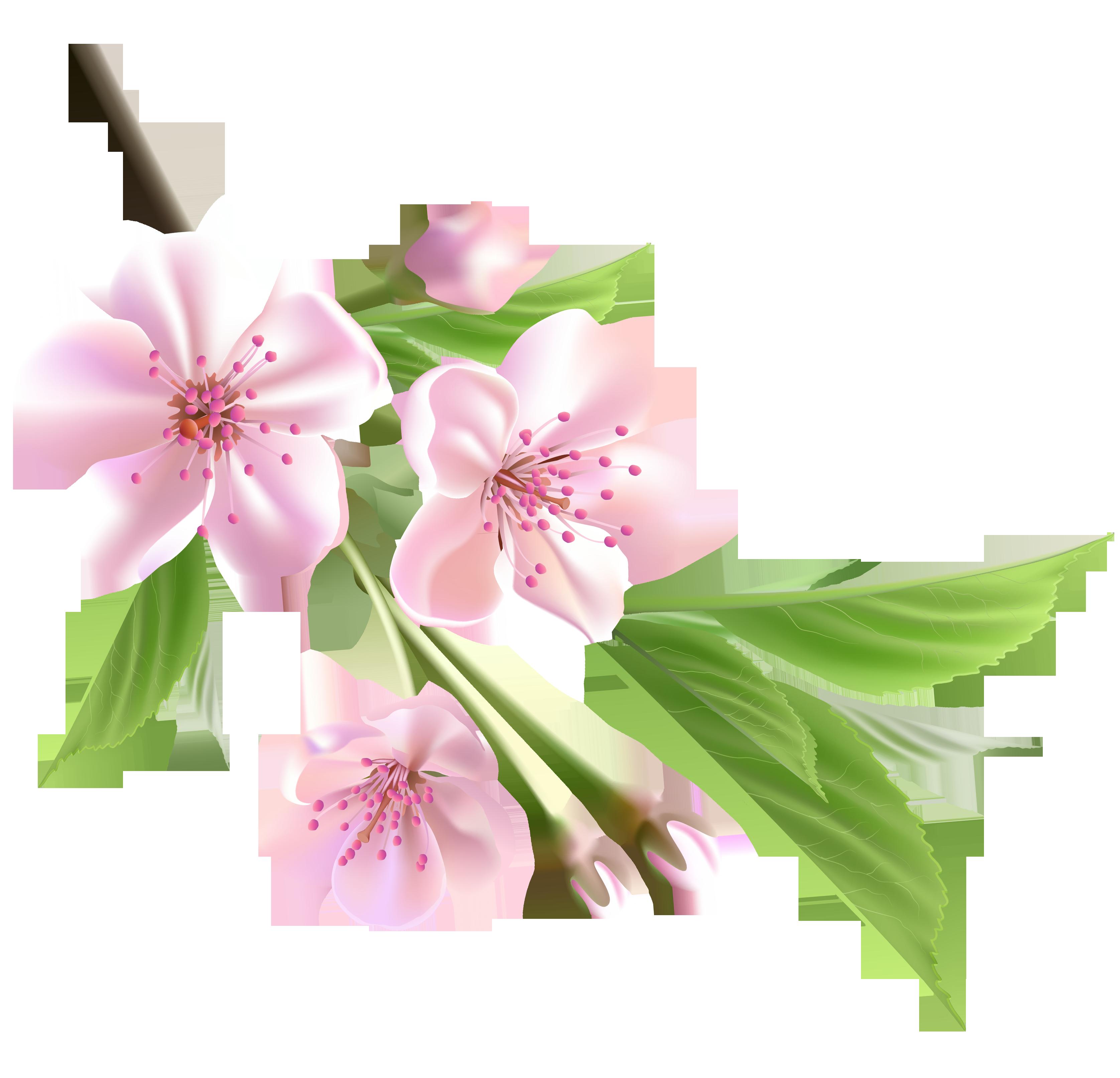 Hoa đào nở PNG