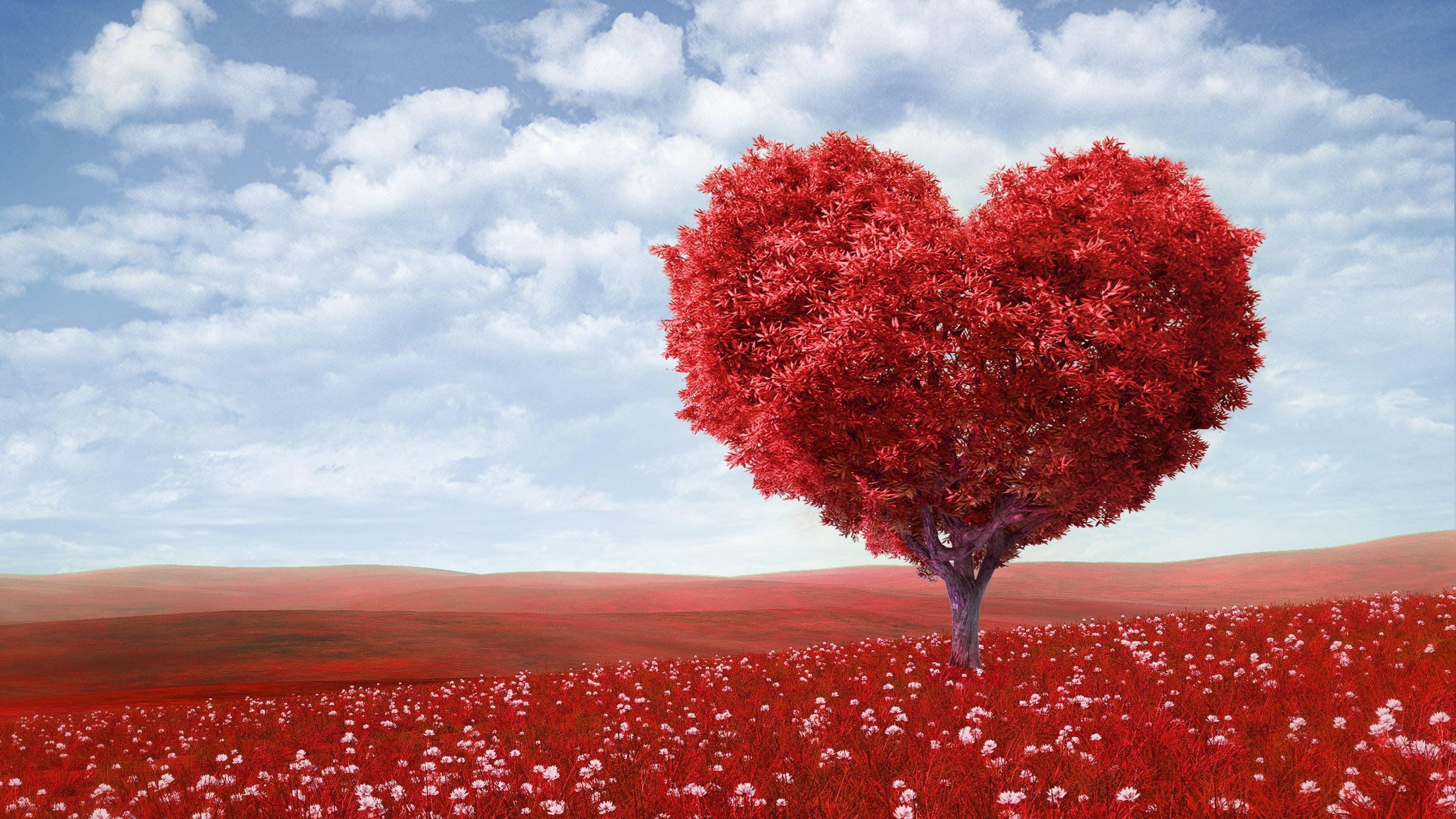 Hình nền cây trái tim